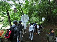 【都筑区】初夏の昆虫観察会〜ゼフィルスの羽化〜